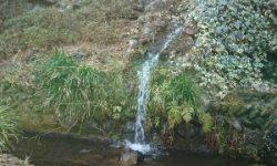 自然水~🎵