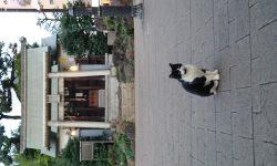 神社に住まうお猫様