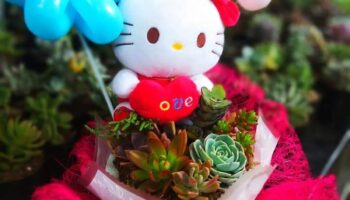 HELLO KITTY PLANTS