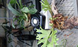 変わった植木鉢
