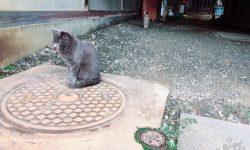 野良猫発見!