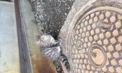 野良猫発見Part2