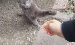 野良猫発見Part4