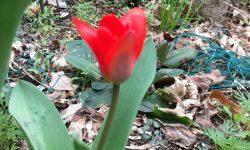 春が来た!!