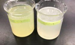玉ねぎの実験